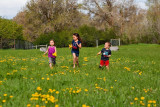 3512 kids in pasture with flowers.jpg