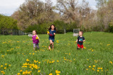 3513 kids in pasture with flowers.jpg