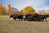 4070 Running of the bulls.jpg