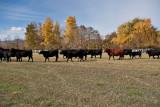 4072 Running of the bulls.jpg