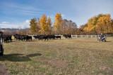 4073 Running of the bulls.jpg