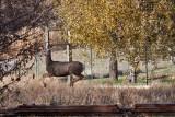 4078 Running of the deer.jpg
