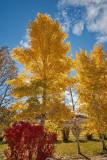 4085 Foliage.jpg