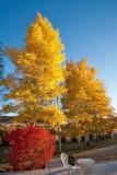 4091 Foliage.jpg