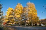 4092 Foliage.jpg