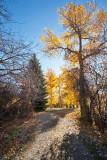4094 Foliage.jpg