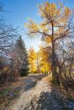 4095 Foliage.jpg