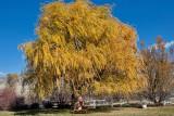 4111 Foliage.jpg
