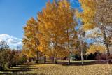 4112 Foliage.jpg