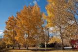 4114 Foliage.jpg