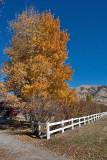 4117 Foliage.jpg