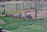 4140  Deer.jpg