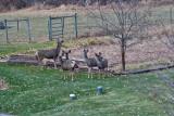 4141  Deer.jpg
