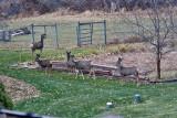 4142  Deer.jpg