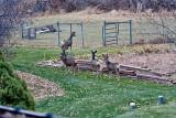 4143 Deer.jpg
