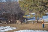 0137 Deer Dave.jpg