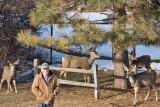 0161 Deer Dave.jpg