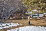 0165 Deer Dave.jpg