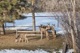0171 Deer Dave.jpg