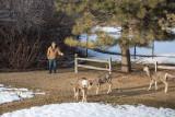 0173 Deer Dave.jpg