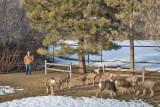 0178 Deer Dave.jpg