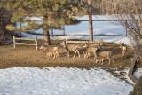 0184 Deer Dave.jpg