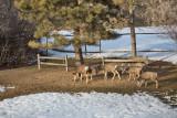 0185 Deer Dave.jpg