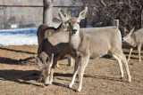 0209 Deer up close.jpg