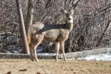 0212 Deer up close.jpg