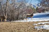 0216 Deer up close.jpg