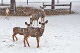 0231 Deer and snow.jpg
