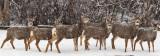 0232 Deer and snow.jpg