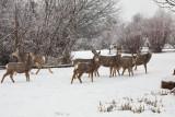 0233 Deer and snow.jpg