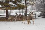 0234 Deer and snow.jpg