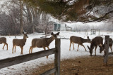 0237 Deer and snow