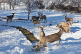 0252 Deer