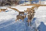 0254  Deer