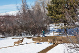 0459 deer and dave.jpg