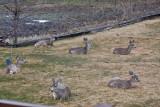 0519 Legless deer.jpg