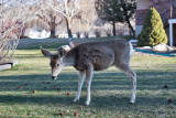 0525  Deer.jpg