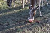 0521 Deer.jpg
