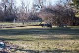 0541 deer.jpg