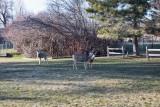 0544 deer.jpg