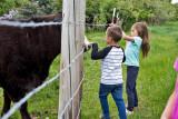 0899_Kids_and_cows.jpg