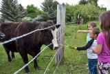 0901_Kids_and_cows.jpg