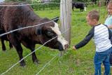 0902_Kids_and_cows.jpg