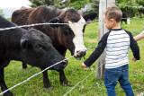 0903_Kids_and_cows.jpg