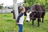 0904_Kids_and_cows.jpg