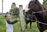 0905_Kids_and_cows.jpg