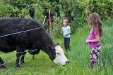 0906_Kids_and_cows.jpg